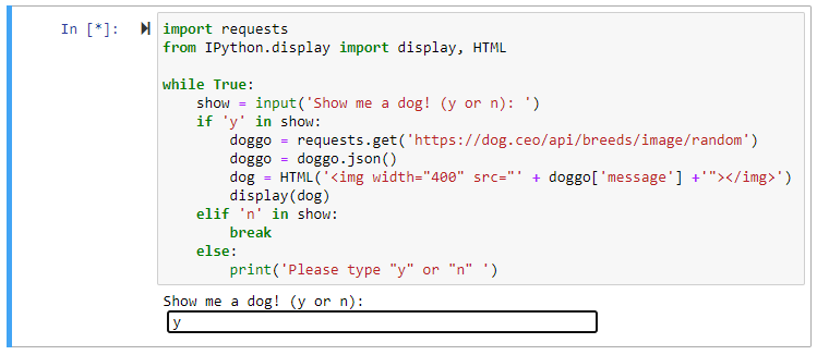 ipython display html